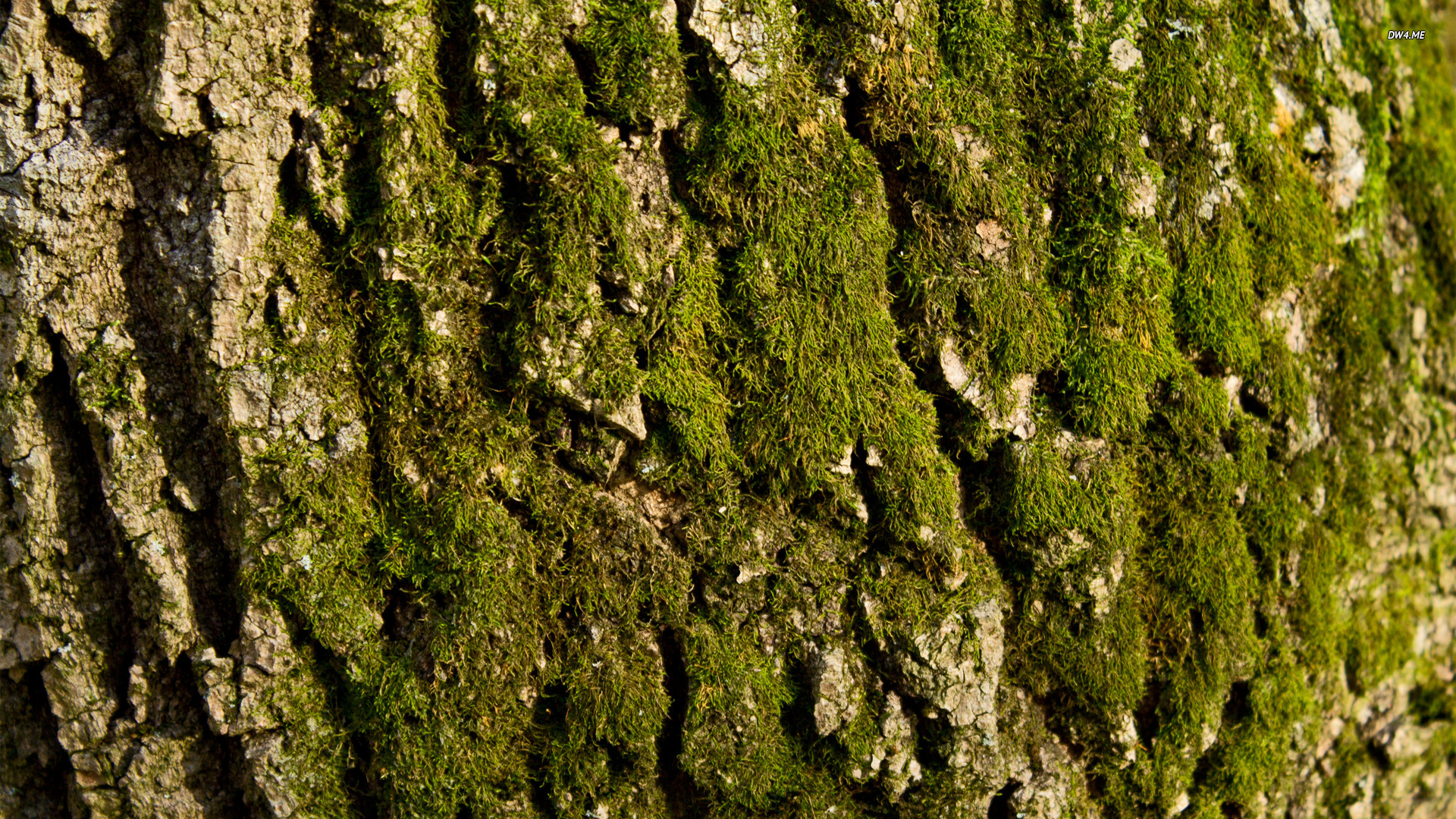 958-mossy-tree-bark-1920x1080-nature-wallpaper